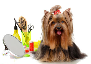 Dog grooming Townsville
