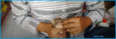 Cara memandikan anak kucing persia