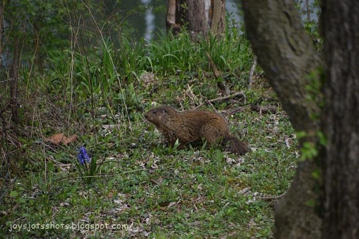 Joy's Jots, Shots & Whatnots: Sun Best ~ Mr. Groundhog on ...