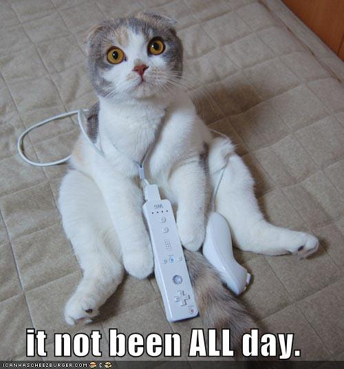 Funny Cat Sayings Quotes: HD Wallpapers: Funny Cat Quotes