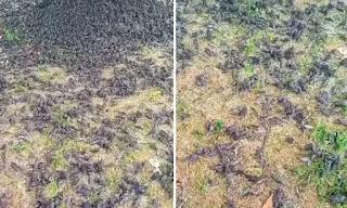 Khám nghiệm tử thi được hé lộ để làm sáng tỏ bí ẩn về những con chim rơi ở Bali