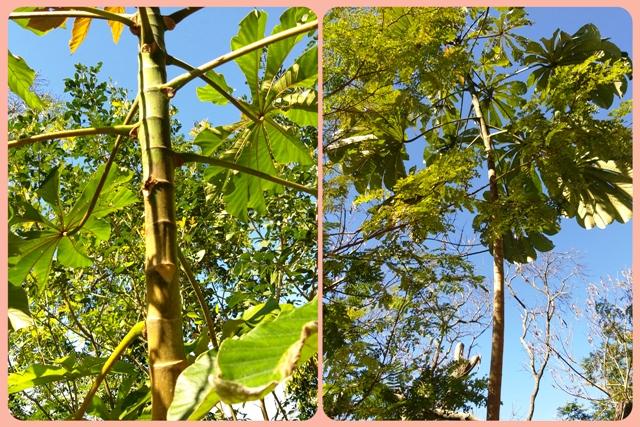No Tour Ecológico do Bondinho você conhece as plantas nativas do bioma No Tour Ecológico do Bondinho Pão de Açúcar você conhece as plantas nativas do bioma No Tour Ecológico do Bondinho Pão de Açúcar você conhece as plantas nativas do bioma