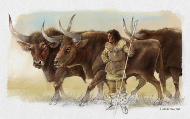 The DNA of three aurochs found next to the Elba shepherdess opens up new enigma