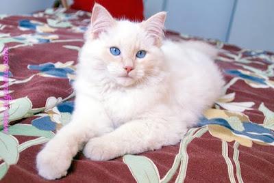 صور صور قطط كيوت 2020 خلفيات قطط جميلة جدا %D8%B5%D9%88%D8%B1-%