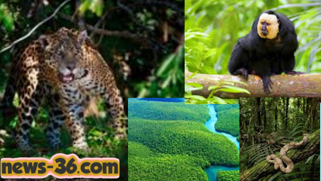 Interesting facts about Amazon forest