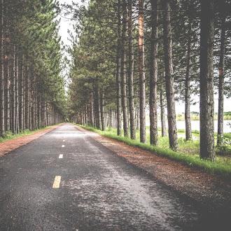 Ağaçlı Yol Hd Duvar Kağıdı