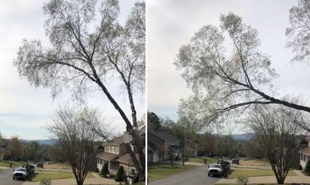 Πτώση δέντρου προκαλεί έκρηξη γύρης (Video)