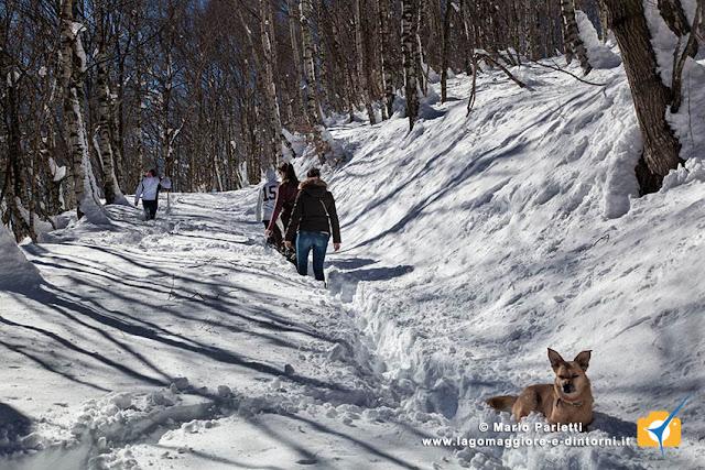 Biegno cangili con la neve