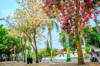 Alun-alun Jombang ada Bunga Tabebuya