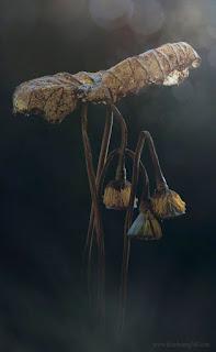 Rác vô thường mà hoa cũng vô thường