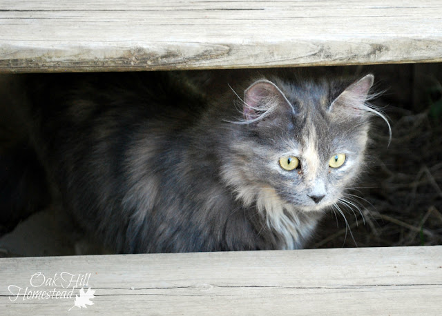 Why your homestead needs a cat carrier!