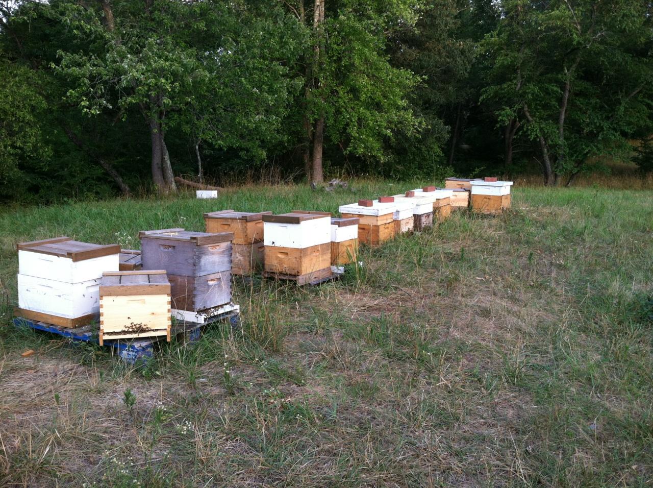 Honey Bee Hives For Sale Honey Bee Hives For Sale | Auto ... - photo#16