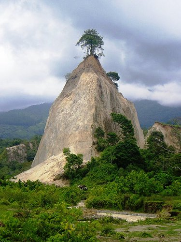 Pohon di atas tebing Jembatan Akar Pohon paling unik dan aneh di indonesia