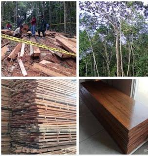 Kekurangan dan kelebihan kayu Meranti merah