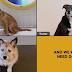 Υιοθεσίες σκύλων μέσω Zoom