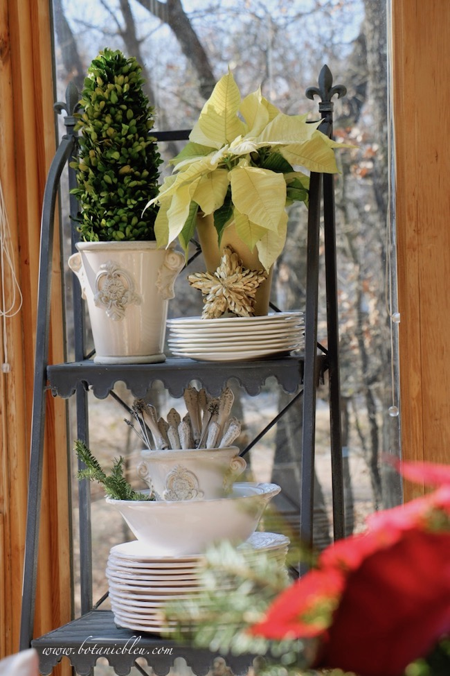 Poinsettias are even prettier on my French Country plate stand  when displayed in a gold painted clay pot with a gold boxwood star