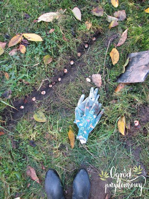 cebule kwiatowe, ogród przydomowy, Benex