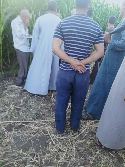 """إستجابة لـ """"الخبر المصري"""" زراعة سوهاج تتخذ إجراءات احترازية لمكافحة حشرة الجياشة بقرية الصلعا"""