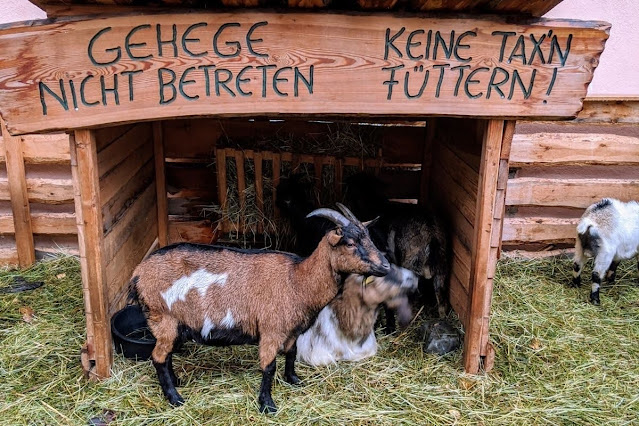Days Trips from Innsbruck for Christmas: Goat the live nativity scene in Hall in Tyrol