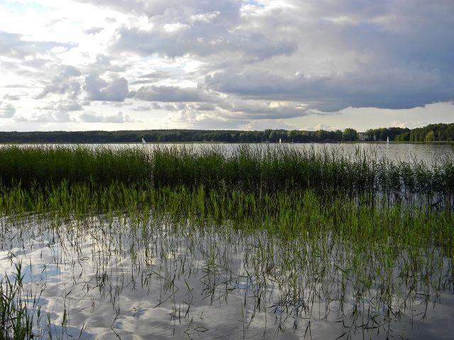 jezioro, rośliny wodne, niebo, chmury