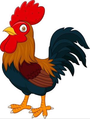 Gambar ayam kartun