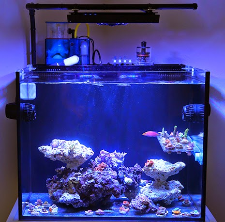 11 Inspirational Innovative Marine Nuvo Aquariums Marine Depot Blog