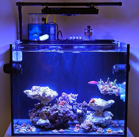 Nuvo Fusion Aquarium