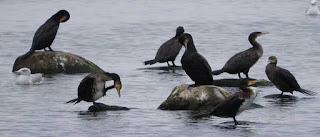 Tahukah Anda Khasiat Burung Air