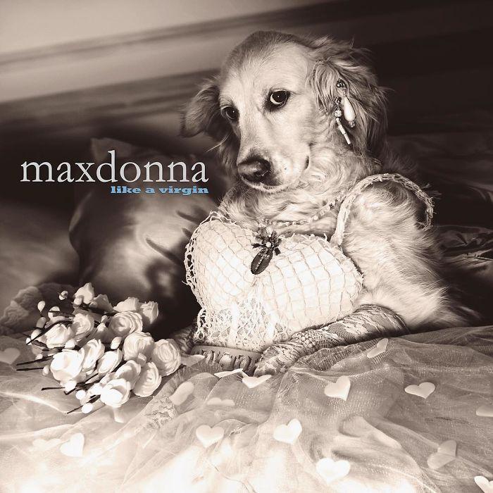 cane ricrea cover-madonna-08