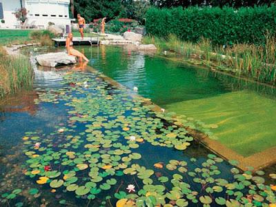 Εργαστήριο για φυσική πισίνα στην Παύλιανη από 15 έως 20 Ιουλίου