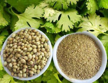 Coriander is not a vegetable but a healing medicine