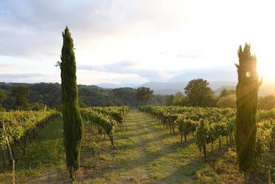 vigne vini bio irpinia