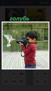 655 слов мальчик фотографирует белого голубя фотоаппаратом 17 уровень