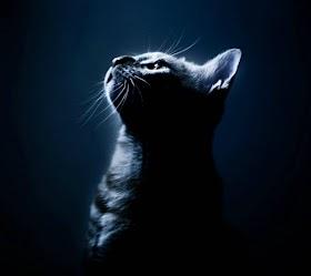 Boss Mèo Huyền Ảo