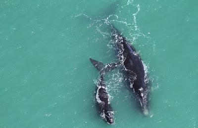 Turismo de observação de baleias em Santa Catarina