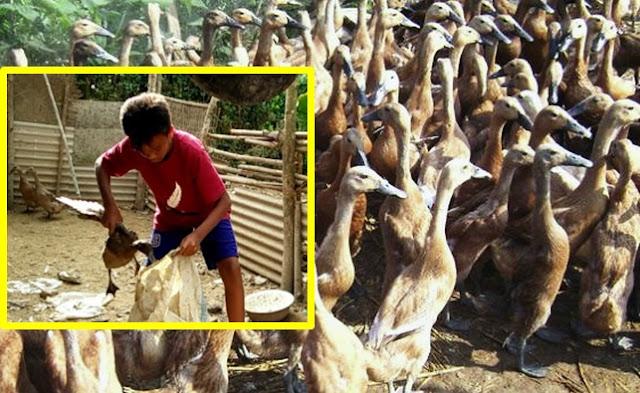 Maling Bebek di Medan Dipukuli dan Disuruh Makan Bebek Yang Masih Hidup