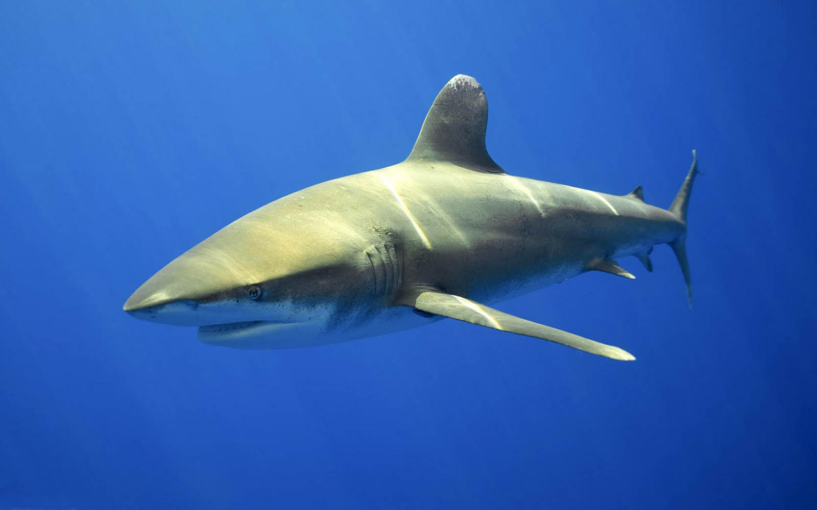 3d Wallpapers For Spring Wallpapers Shark Wallpapers