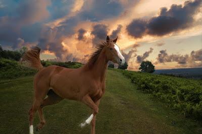 Häst - Rörelse för djurrätt