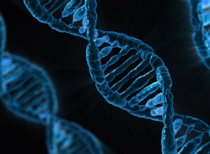 Genética | Lei da Segregação Independente