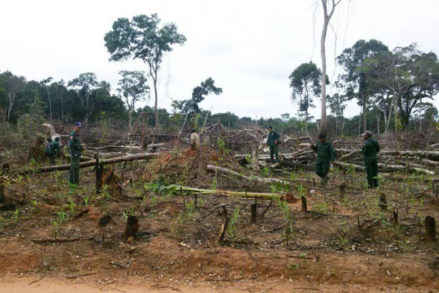 Authorities search a section of state forest in Pursat province on Tuesday after it was cleared illegally. Forestry Administration