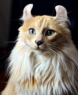 Real American Curl cat with funny ears