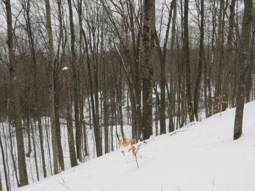 Eddington Creek