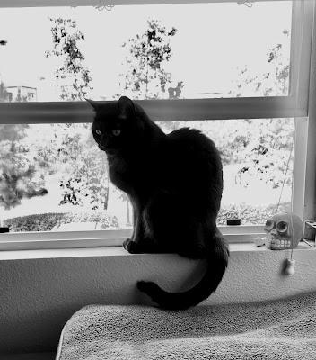tinycat in the window