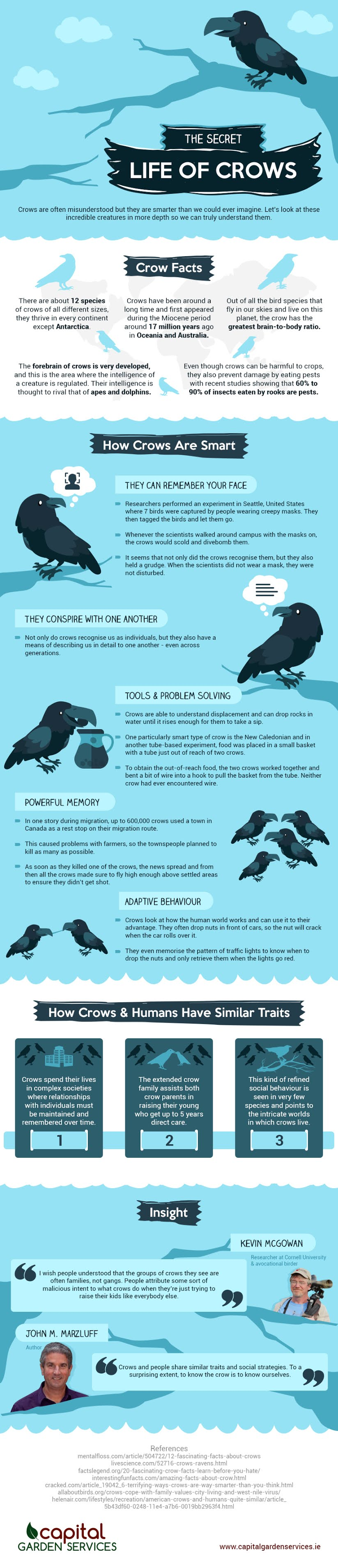 The Secret Life of Crows #infographic