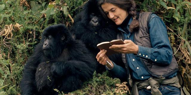 34ème Anniversaire du départ de Dian Fossey ; la femme qui a donné sa vie pour défendre les gorilles