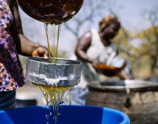 Shea oil is a multi-purpose food grade cooking oil