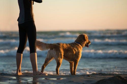 Conseils pour profiter de la plage avec votre chien