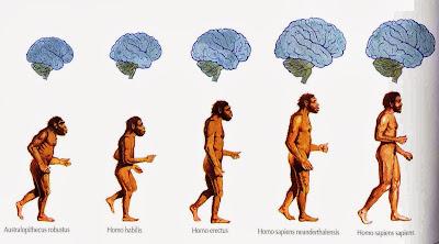 Resultado de imagen de proceso de hominización
