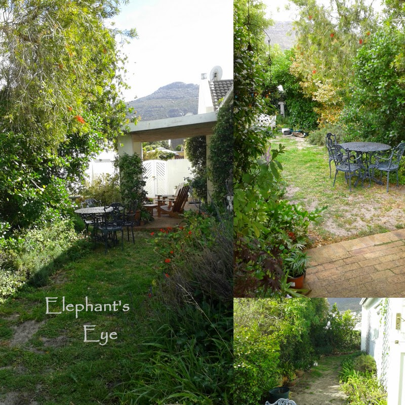 Overgrown garden needs pruning, and love