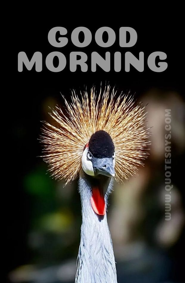 Beautiful Good Morning Bird